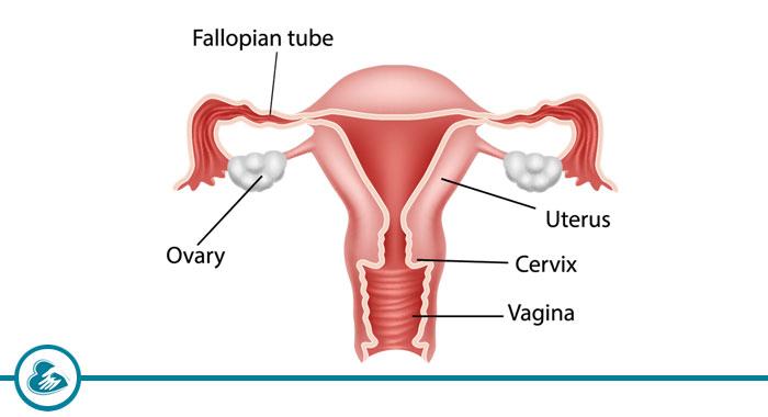 Ultrasound/Examination